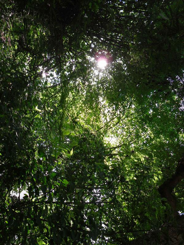 jardin_couvent_paris.jpg